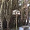 【鹿児島旅行記2018】周遊バスに乗って雄川の滝と佐多岬に行ってきた(前編)